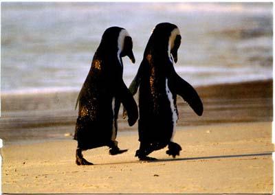 """<i>""""Tình yêu đồng giới""""</i> phổ biến trong thế giới động vật"""